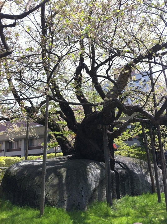 高橋比奈子の画像 p1_28